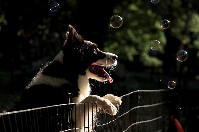 לשחק עם הכלב
