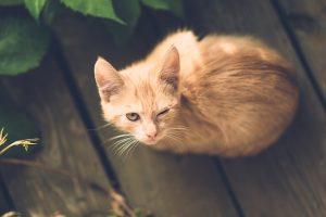 פרו פלאן עוף לחתולים